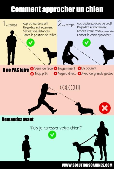 approcher un chien