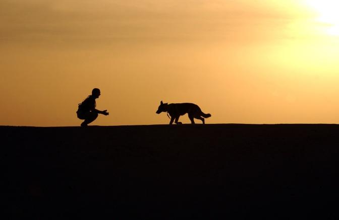 Comment approcher un chien?
