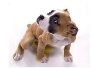chien-pipi-soumission1