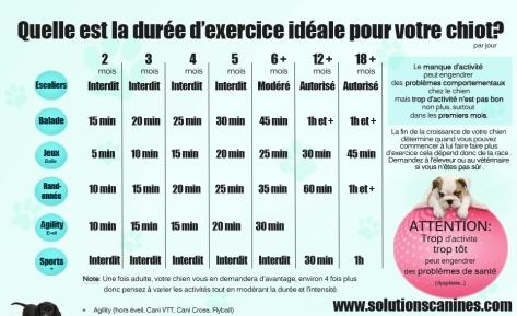 quelle est la duree d exercice ideale pour votre chiot