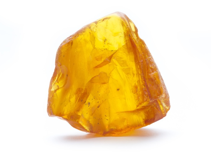 L'ambre pour votre chien?