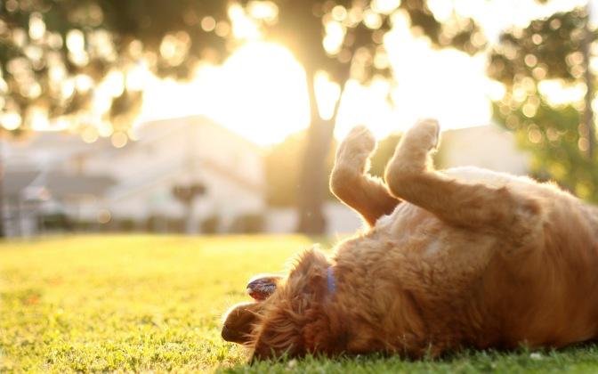 Quelques conseils canins pour un super été