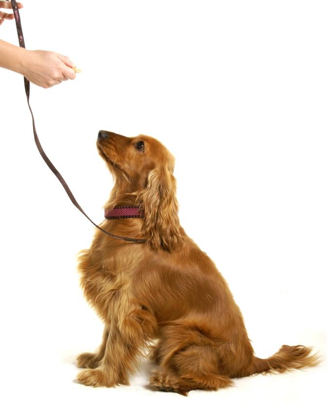 Les 10 meilleurs conseils d'éducation canine