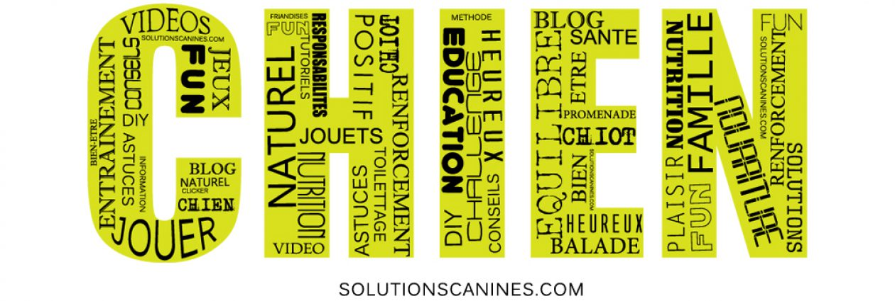 Solutions Canines Le Blog