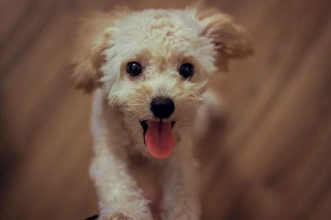 11 petites astuces pour faire avaler un médicament à son chien