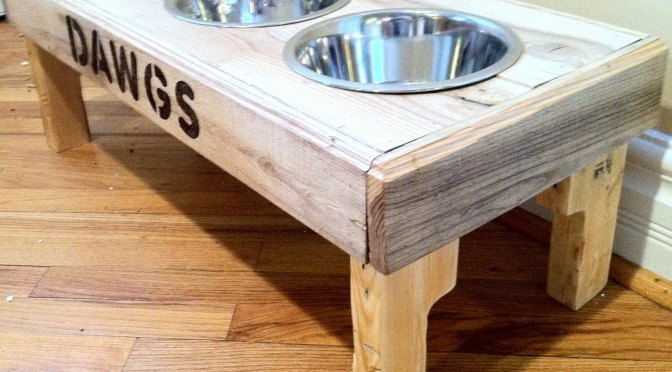 Devriez-vous surélever les gamelles de votre chien? (Vidéo)