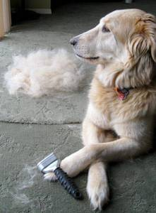 furminator-all-done