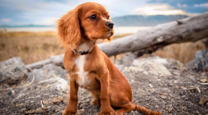 Découvrez le Varech pour votre chien