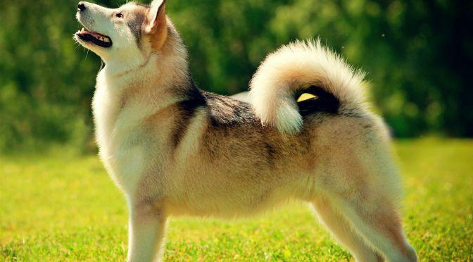 Découvrez quelques astuces pour le beau poil de votre chien