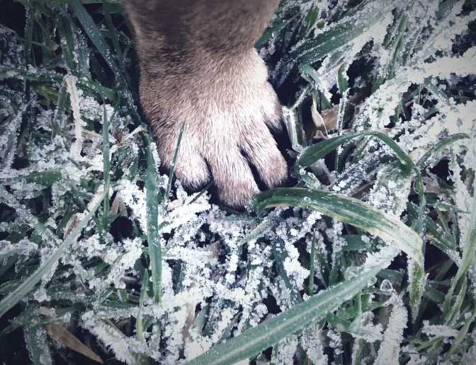 Réalisez vous-même un soin pour les pattes de votre chien