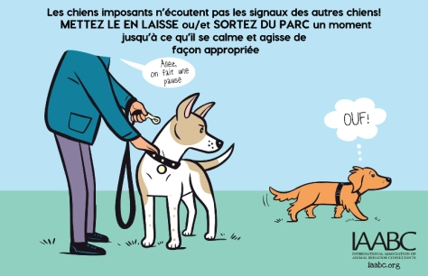 votre-chien-est-il-imposant2