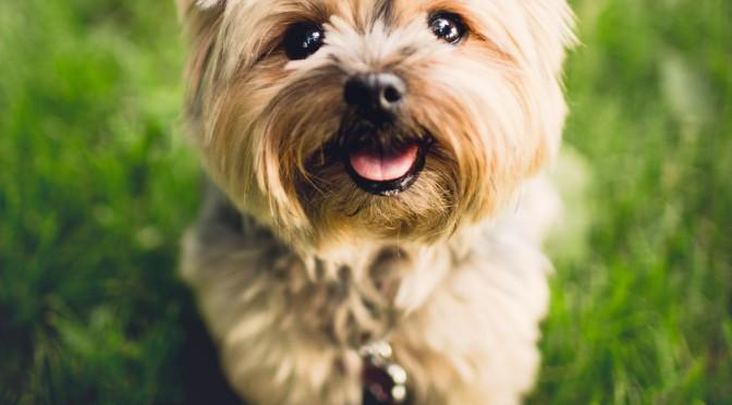 Découvrez une solution naturelle contre les kystes et tumeurs de votre chien
