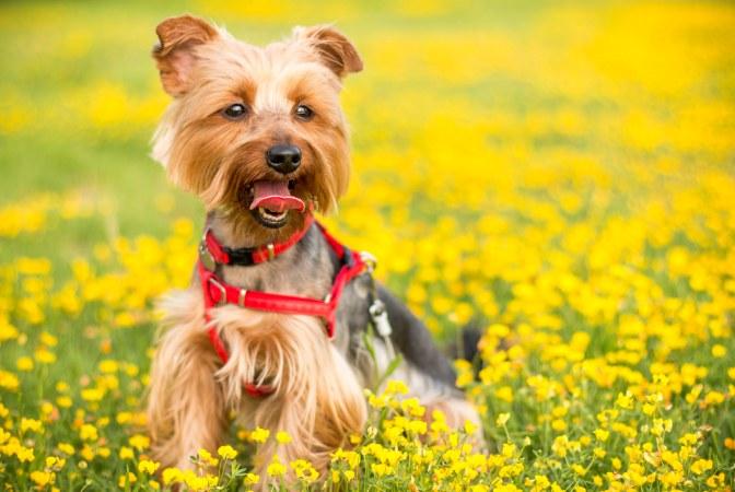 Les bienfaits du curcuma pour votre chien