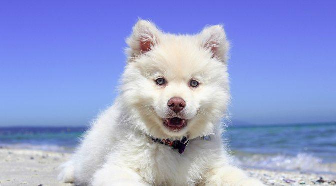 Une super idée rafraîchissante pour votre chien