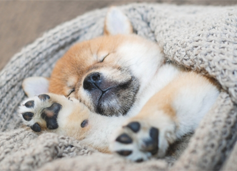 pup sleeping
